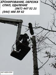 Удаление деревьев Киев 466 59 42 Спил деревьев Киев. Корчевание пней.