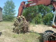 Аварийный спил деревьев (067)4475221,  удаление аварийных деревьев Киев